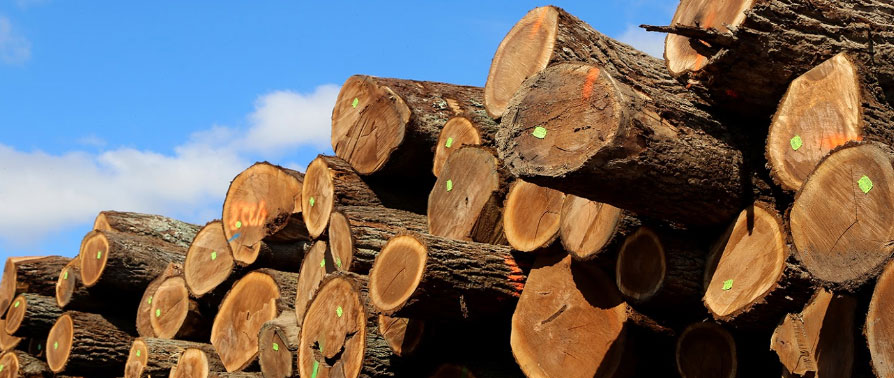Managing your woodlot